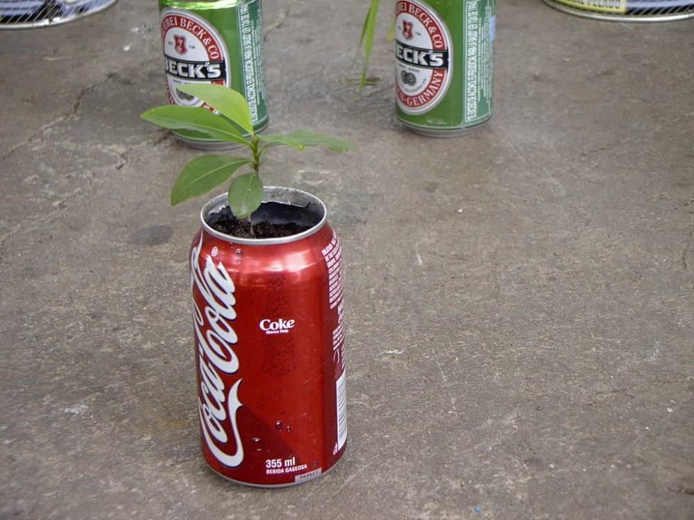 Coca plant 2.jpg