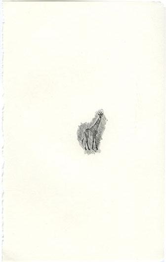 animales49.jpg