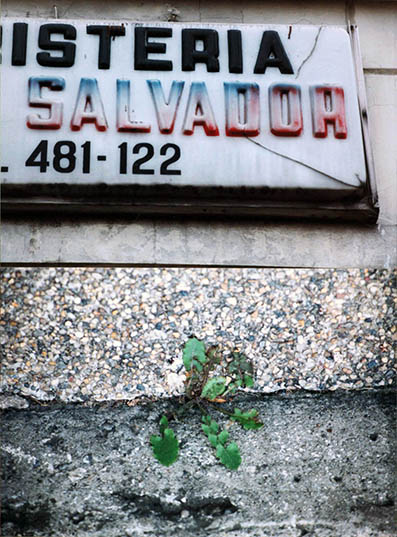 salvador.jpg